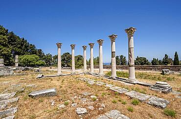 Roman columns, ruins of the Roman healing temple Asklepieion, Kos, Dodecanese, Greece, Europe