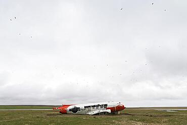 Emergency-landed American Air Force transport aircraft Douglas R4D-6 41-50187, now a shelter for sheep, near Porshoefn, Sauoanes, Langanes Peninsula, Iceland, Europe
