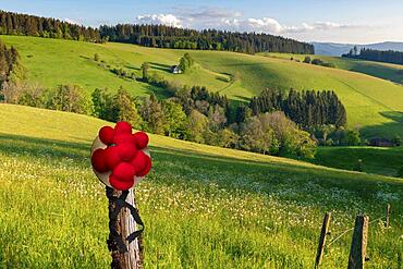 Lonely farmhouse in hilly landscape, Bollenhut, spring, St.Maergen, Black Forest, Baden-Wuerttemberg, Composing, Germany, Europe