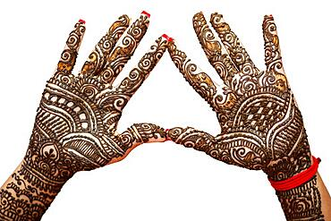 Indian Bride's hand painted with mehndi isolated on white background. Mauritius, Africa