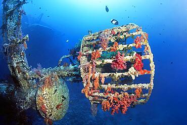 Lookout covered with Klunzinger's soft corals (Dendronephthya klunzingeri), Shipwreck, Wreck, Cedar Pride, Red Sea, Aqaba, Kingdom of Jordan