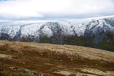 Tundra in autumn, Dovrefjell-Sunndalsfjella National Park, Norway, Europe