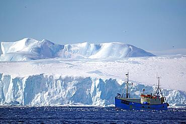 Small fishing boat in front of huge icebergs and drift ice, seagulls, winter, Disko Bay, Ilulissat, West Greenland, Denmark, Europe
