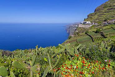 View of Faja dos Padres on South Coast near Cabo Girao, Camara de Lobos, Madeira, Portugal, Atlantic, Europe