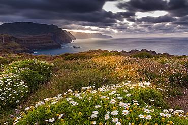 Rocky coast at the Ponta da Sao Lourenco and spring flowers at sunset, Eastern tip of the island, Madeira, Portugal, Atlantic, Europe