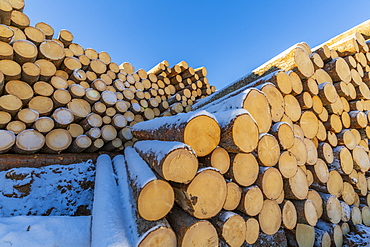 Log piles in snow in Carezza, Italy, Europe