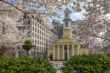 View of the St. John's Episcopal Church and spring blossom, Washington D.C., United States of America, North America