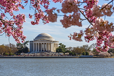 Thomas Jefferson Memorial, Tidal Basin and cherry blossom trees, Washington D.C., United States of America, North America