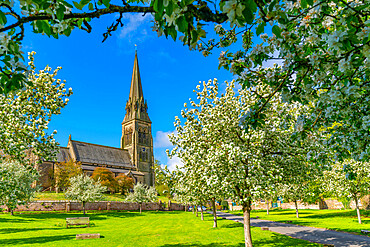 View of St Peter's Church and spring blossom, Edensor Village, Chatsworth Park, Bakewell, Derbyshire, United Kingdom, Europe