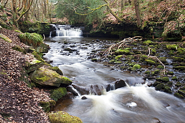 Waterfall on Harden Beck in Goitstock Wood, Cullingworth, Yorkshire, England, United Kingdom, Europe