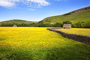 Field barns and buttercup meadows at Muker, Swaledale, Yorkshire Dales, Yorkshire, England, United Kingdom, Europe