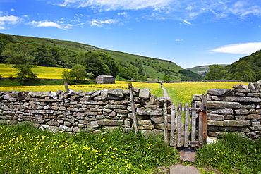 Dry stone wall and gate in meadow at Muker, Swaledale, Yorkshire Dales, Yorkshire, England, United Kingdom, Europe