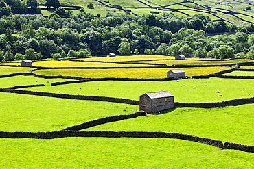 Barns and dry stone walls in meadows at Gunnerside, Swaledale, Yorkshire Dales, Yorkshire, England, United Kingdom, Europe