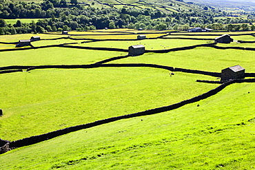Barn and dry stone walls in meadows at Gunnerside, Swaledale, Yorkshire Dales, Yorkshire, England, United Kingdom, Europe