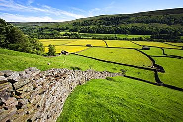 Summer meadows at Gunnerside in Swaledale, Yorkshire Dales, Yorkshire, England, United Kingdom, Europe