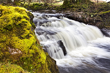 Mossy rock and waterfall on Grisedale Beck near Garsdale Head, Yorkshrie Dales, Cumbria, England, United Kingdom, Europe