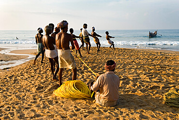 Fishermen hauling in nets at sunrise, Chowara Beach, near Kovalam, Kerala, India, Asia