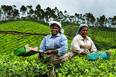 Tea pickers, near Munnar, Kerala, India, Asia