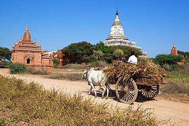 Wooden ox cart passing Shwesandaw Temple, Bagan (Pagan), Central Myanmar, Myanmar (Burma), Asia