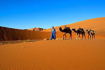 Moroccan camel driver, Dunes of Erg Chebbi, Merzouga, Meknes-Tafilalet, Morocco, North Africa, Africa
