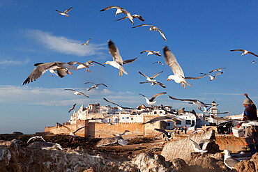 View to the ramparts and medina with seagulls, Essaouira, Atlantic coast, Morocco, North Africa, Africa