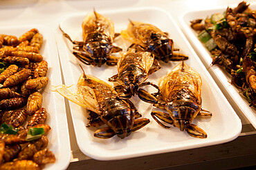 Fried insects at food stall in the Night Bazaar, Chiang Mai, Northern Thailand, Thailand, Southeast Asia, Asia