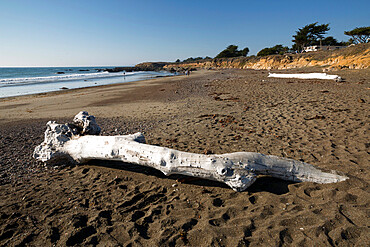 Driftwood on beach, Moonstone Beach Park, Cambria, San Luis Obispo county, California, United States of America, North America