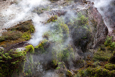 Hot steam, Craters of the Moon Thermal Area, Taupo, North Island, New Zealand, Pacific