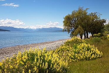 Lake Te Anau, Te Anau, Southland, South Island, New Zealand, Pacific
