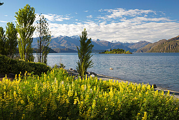 Spring flowers on Lake Wanaka, Wanaka, Otago, South Island, New Zealand, Pacific