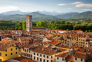View over city to San Frediano from atop Torre Guinigi, Lucca, Tuscany, Italy, Europe