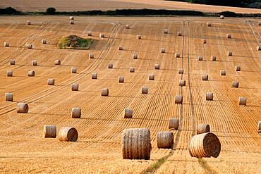 Round hay bales, Swinbrook, Cotswolds, Oxfordshire, England, United Kingdom, Europe