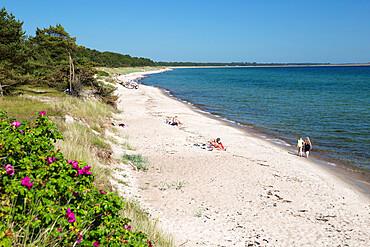 View along pine tree lined beach, Nybrostrand, near Ystad, Skane, South Sweden, Sweden, Scandinavia, Europe
