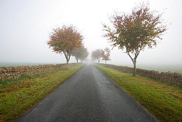 Empty tree lined road in fog, Yanworth, Gloucestershire, England, United Kingdom, Europe