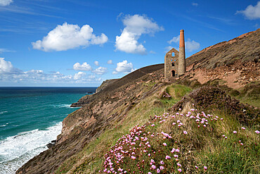 Wheal Coates Engine House, UNESCO World Heritage Site, and coastline with thrift flowers, St. Agnes, Cornwall, England, United Kingdom, Europe
