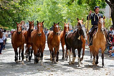 Gaucho parade on the Day of Tradition, San Antonio de Areco, La Pampa, Argentina, South America
