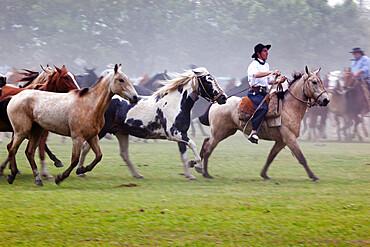 Gaucho festival on the Day of Tradition, San Antonio de Areco, La Pampa, Argentina, South America