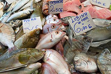 Fresh fish in the Mercado Central de Abastos food market, Jerez de la Frontera, Cadiz province, Andalucia, Spain, Europe