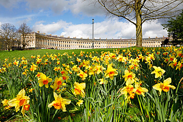 Spring daffodils in front of Georgian style terraced houses of Royal Crescent, Bath, UNESCO World Heritage Site, Somerset, England, United Kingdom, Europe