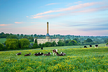 Bliss Mill at dawn with cows in field, Chipping Norton, Cotswolds, Oxfordshire, England, United Kingdom, Europe