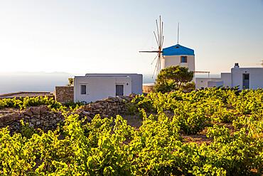 Traditional white windmill set amongst vineyards, Artemonas, Sifnos, Cyclades, Aegean Sea, Greek Islands, Greece, Europe