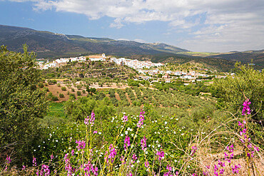 View in spring over the white Andalucian village of El Burgo, Malaga Province, Andalucia, Spain, Europe