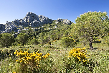 Rugged mountain scenery in spring near Grazalema, Sierra de Grazalema Natural Park, Andalucia, Spain, Europe