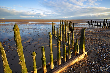 Rotting upright wooden posts of old sea defences on Winchelsea beach, Winchelsea, East Sussex, England, United Kingdom, Europe