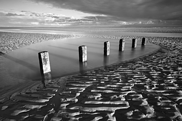 Rotting wooden posts of old sea defences on Winchelsea beach at low tide, Winchelsea, East Sussex, England, United Kingdom