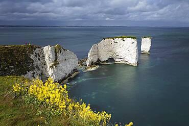 Old Harry Rocks on the Jurassic Coast, UNESCO World Heritage Site, Swanage, Dorset, England, United Kingdom, Europe