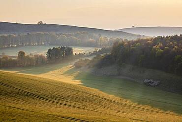 Misty landscape with Beacon Hill and Ladle Hill, Highclere, North Wessex Downs AONB (Area of Outstanding Natural Beauty), Hampshire, England, United Kingdom, Europe