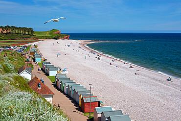 View along shingle beach and beach huts, Budleigh Salterton, Jurassic Coast, Devon, England, United Kingdom, Europe