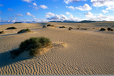 Sand dunes, near Corralejo, Fuerteventura, Canary Islands, Spain, Atlantic, Europe