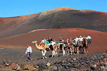 Dromedary ride on slopes of Timanfaya mountain, Timanfaya National Park, Lanzarote, Canary Islands, Spain, Europe - 846-923